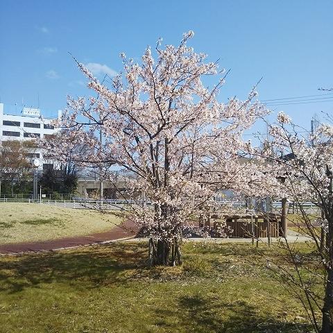 やっと春らしくなりました